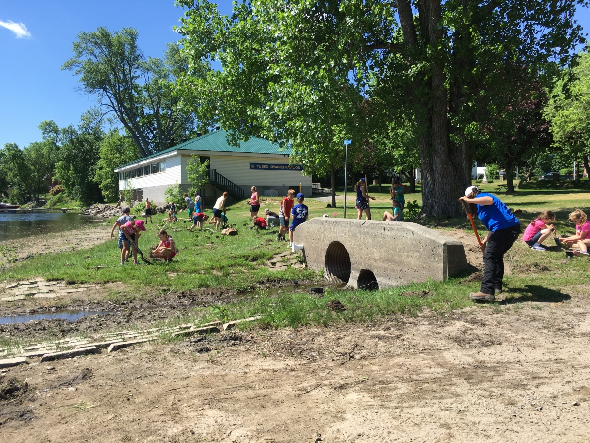 Enhanced Natural Shoreline Planting - St. Carthagh Students/Quinte Conservation May 31 2016